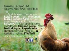 doa-makbul-ketika-ayam-berkokok